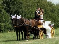 svadba kone kociar