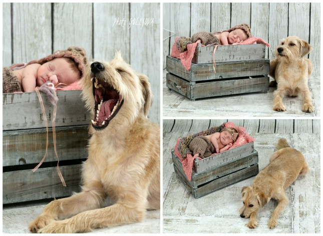 psik a jeho rodina fotky