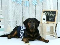 pes verny priatel