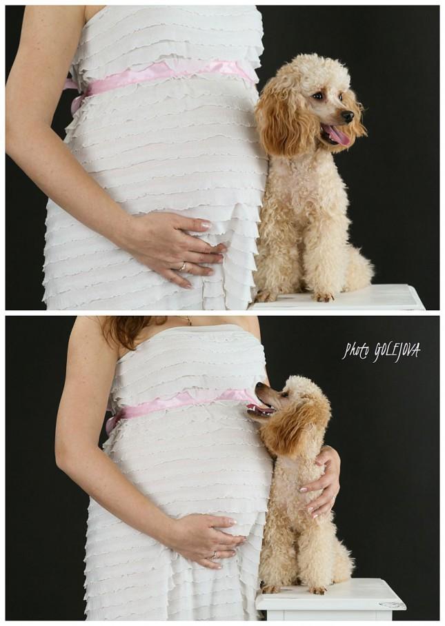 pes a buduce babatko