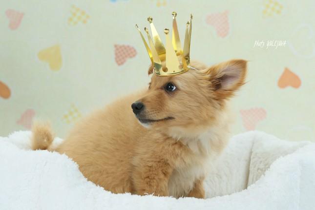 psia královna