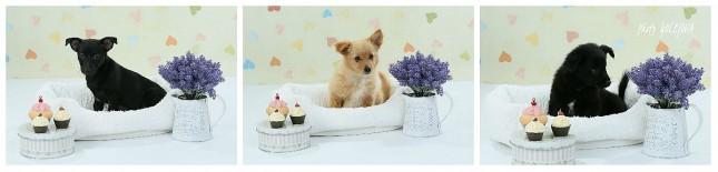 steniatka cupcakes