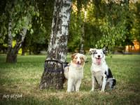 fotograf pre psov a macky