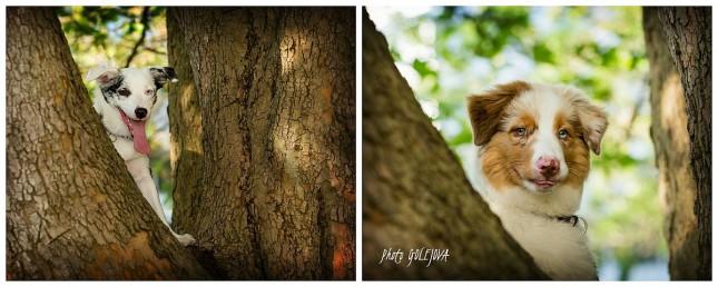 psy na strome