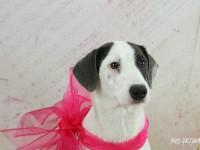 psia slecna na adopciu