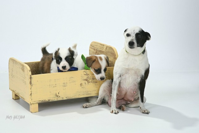 03 psia rodinka