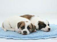 pomoc utulku pre psov