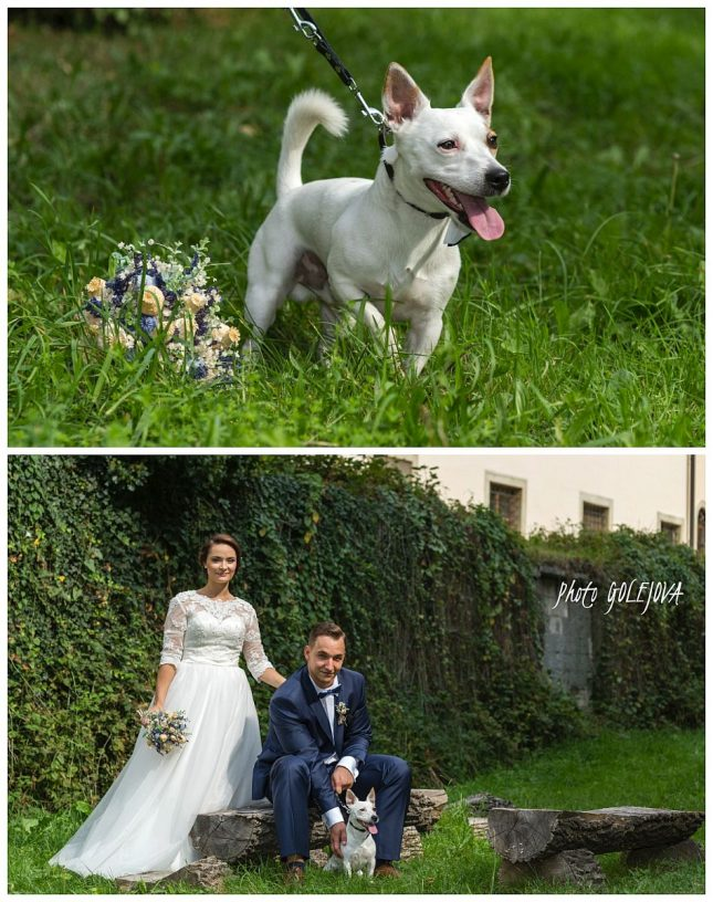 46-pes-na-svadbe