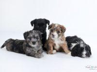 psik pes chovna stanica