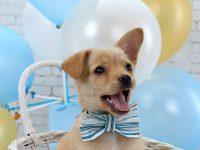 balony pre psa