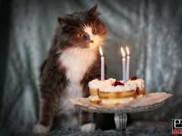 oslava narodenin party