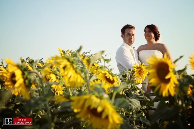 15 slnecnice pole svadba