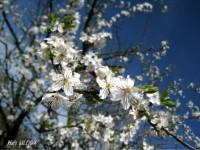 jar v Bratislave