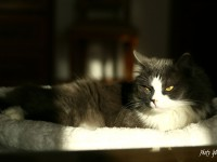 fotografia zvierat