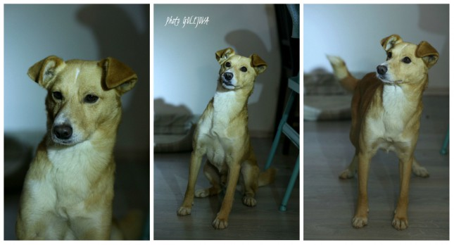collage Bizy4