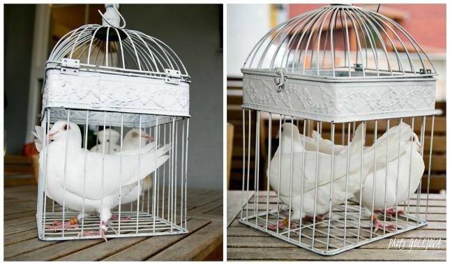 svadobne holubky