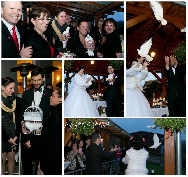 vypustanie svadobnych holubov