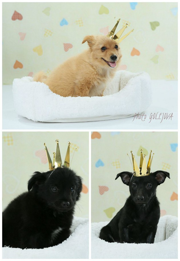 psi krali princi princezne