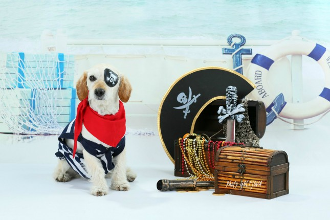 Alvin piratom