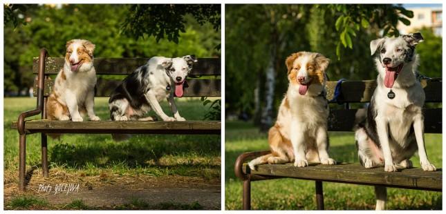 psy na lavicke