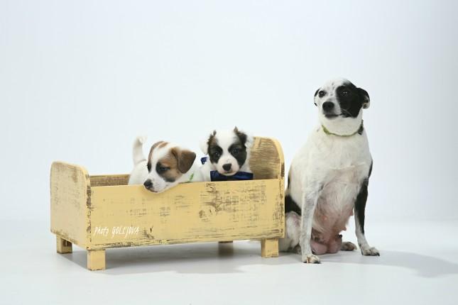 04 psi v atelieri