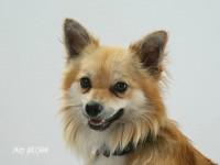 fotograf psov atelier