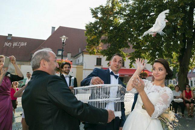 108-svadobna-holubica