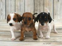 trio-steniatka-surodenci