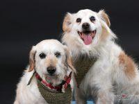 portrety psi milacik