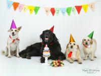 narodeniny pre psa